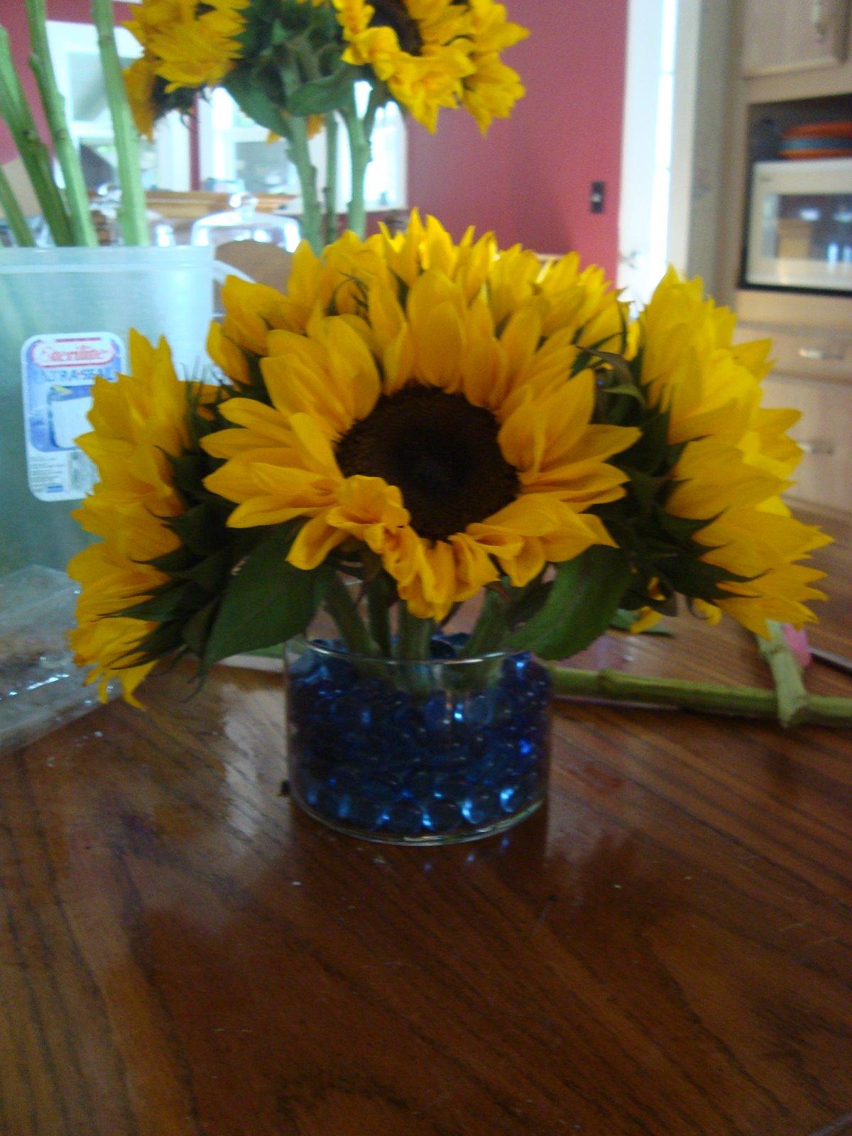 Sunflower trials arizona mamma
